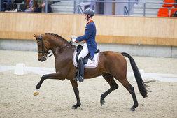 Diederik van Silfhout <br><span>Dressage<i>NL</i></span>
